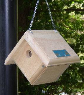 Hanging House Wren