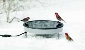 Bird Bath - Heated Ground Level